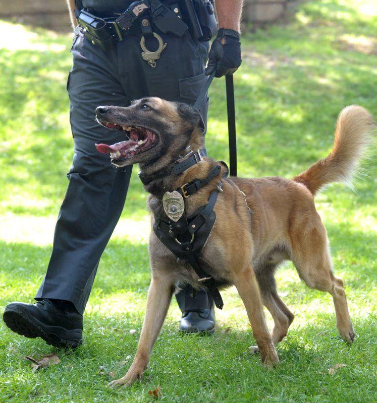 german shepherd police dog 21 the dog wallpaper