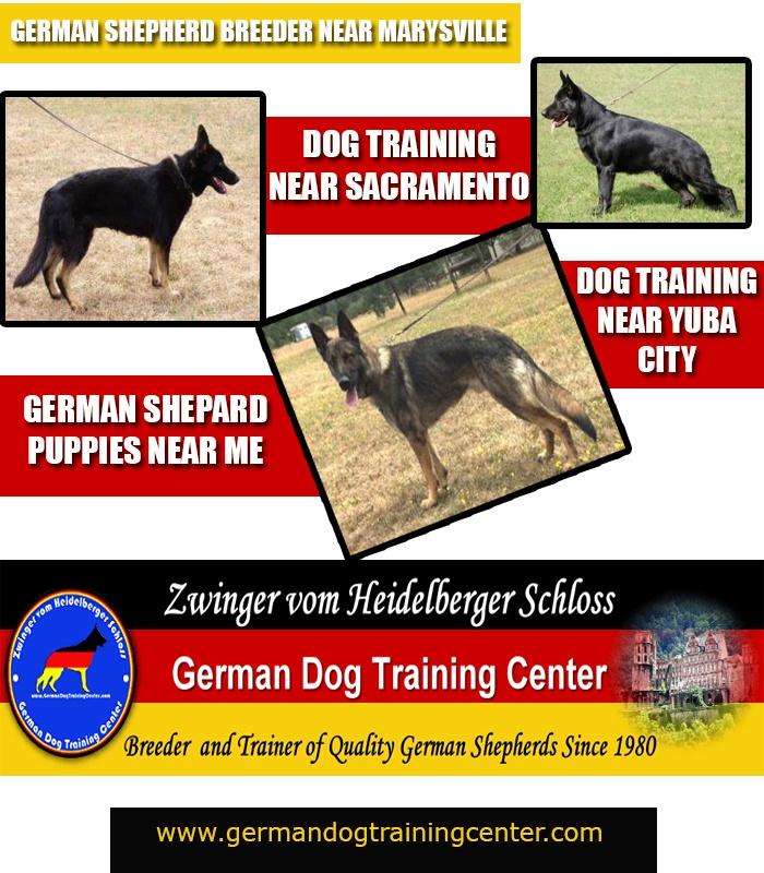 German Shepherd Training School Near Me