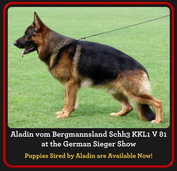 aladin-homepage