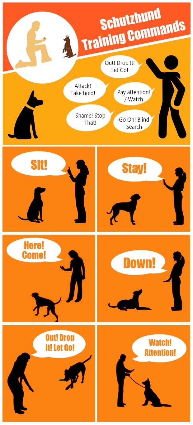 Schutzhund Training Commands